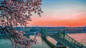 The Liberty or Szabadság bridge of Budapest on the River Danube with a blossoming spring tree